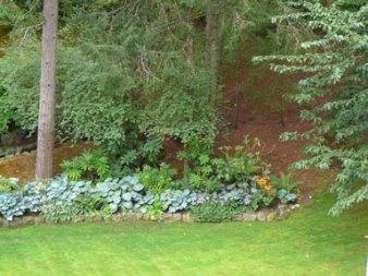 Shady Garden