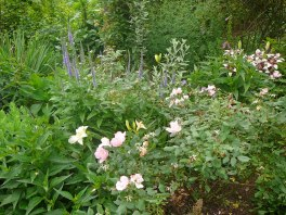 Veronica, Rose, & Lilies
