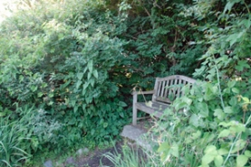 Bench is hidden by overgrowth