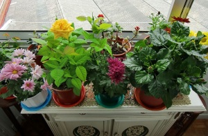Keep humidity up for your houseplants this winter by clustering them, and don't fertilize until spring.