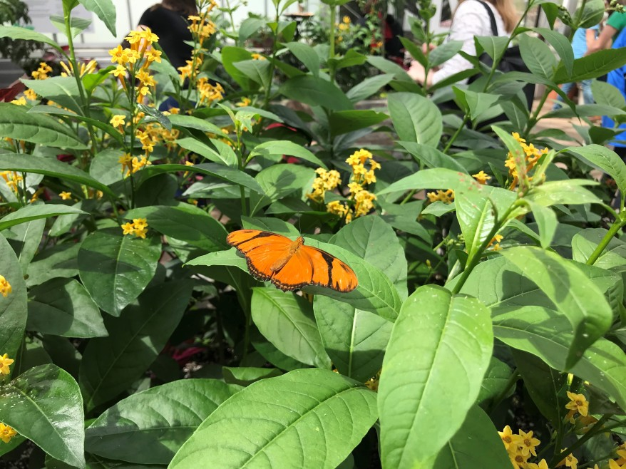 Lewis Ginter Butterfly Conservatory Richmond Virginia