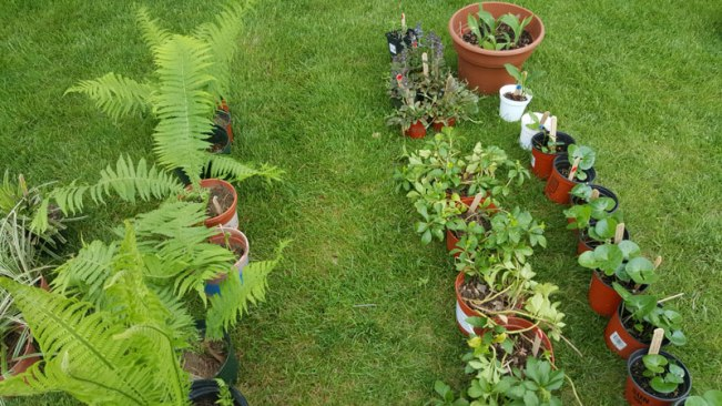 Plant-Sale-2ed